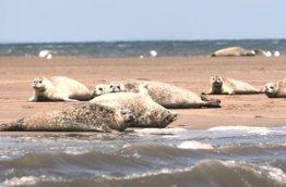 Ingoldisthorpe Hunstanton Seal Isalnd