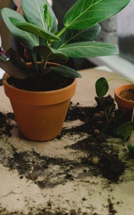 Gartenpflege Ascheberg