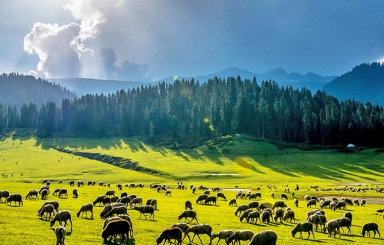 Betab valley- Kashmir winter trip