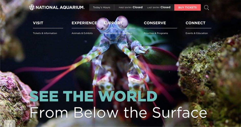 national-aquarium-web-page